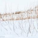 Sneeuw en grassprieten