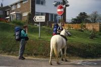 SWC1 paard op hol